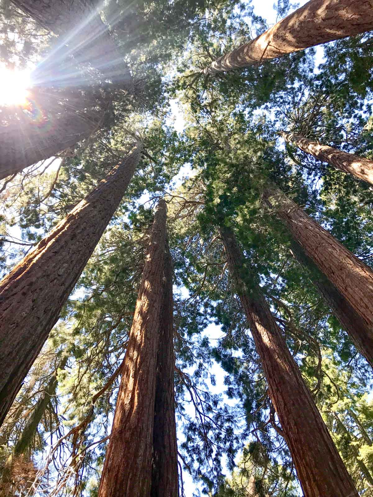 All our favorite places to visit and sites to see in Sequoia National Park.
