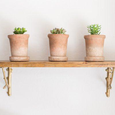 Three Easy Care Houseplants