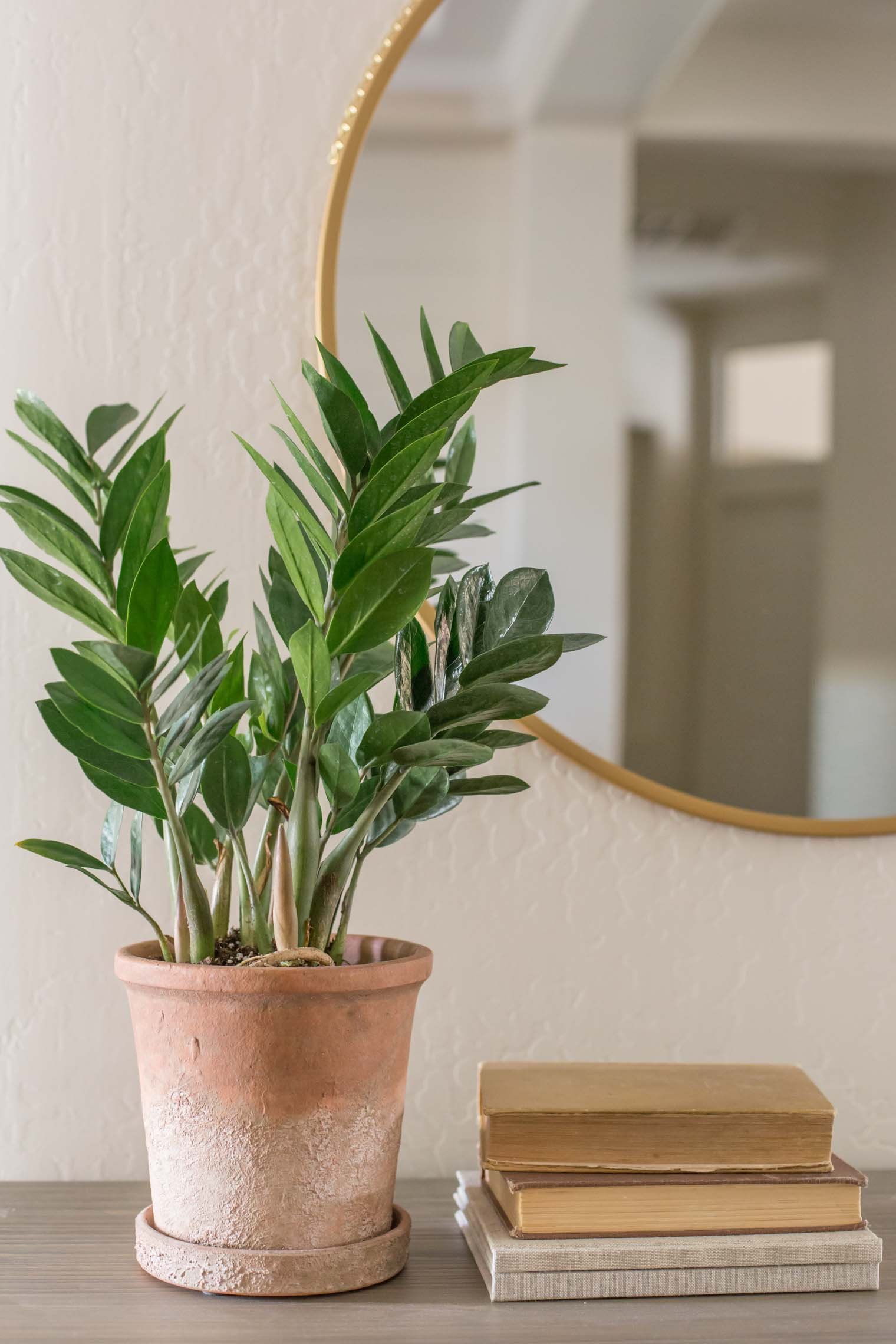 Here are a few houseplants that have been thriving in my home for the last few months and tips for keeping them happy and healthy!